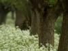 botanisch-beheer-201300003