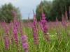 botanisch-beheer-20130812-874