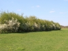 landschapselement-20130002