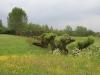 landschapselement-20130006