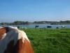landschap-20130103